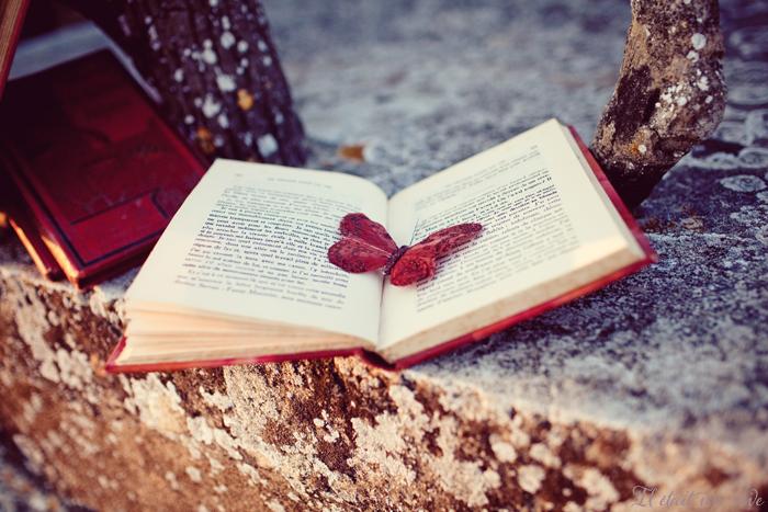 Belle e faldo il mio angolo di lettura e riflessioni - Va dove ti porta il cuore frasi piu belle ...